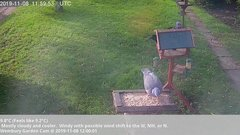 view from Wembury, Devon. Garden Cam on 2019-11-08