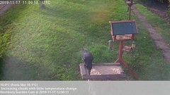 view from Wembury, Devon. Garden Cam on 2019-11-17
